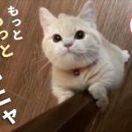 かわいい・癒やされる犬、猫、動物たちの人気動画をまとめました♪ 見逃した方は必見です!【 PECOTV 】
