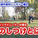 犬のしつけ ヨーロッパ ドッグトレーナー 訓練士 いぬプロ海外取材ハンガリー編vol.2
