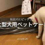 JDog 秋田犬TAM 物語79 大型犬用 プロフェッショナルペットゲージ