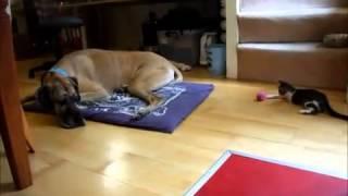 犬と猫が仲良くなるまで‥‥