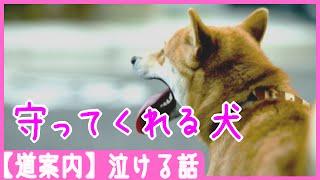 【道案内】守ってくれる犬- 泣ける話