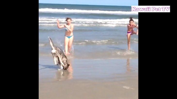「おもしろ犬と海」海に大興奮する犬たち・めっちゃ楽しそう