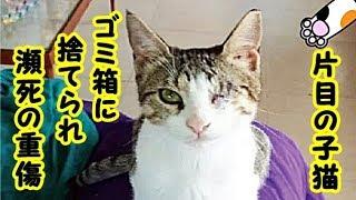 感動 泣ける話・ゴミ箱へ捨てられ瀕死状態で発見された子猫、心優しい男性のおかげで一命を取り戻す・招き猫ちゃんねる