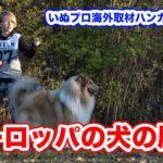 ヨーロッパの犬の歴史 世界の犬のしつけ IPO 訓練士 子供が犬を扱うコツ いぬプロ海外取材ハンガリー編vol.4
