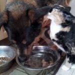 親友だった犬を失った猫。飼い主さんは猫を元気づけようと・・