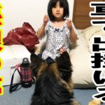 子供とシェパード犬の夢German Shepherd dog