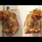 「絶対笑う」最高におもしろ犬,猫,動物のハプニング, 失敗画像集 #63