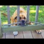 インターネット上で一番ホットなビデオ♥面白い動物♥犬、猫、動物の面白い瞬間#40