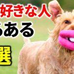 【あるある】犬が好きな人なら分かる「犬好きあるある」7選!愛犬に赤ちゃん言葉使ってませんか?