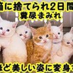 感動 泣ける話・ゴミ箱の中に捨てられ、2日間も寒さと飢えに耐えた5匹の子猫たち。保護されると見違えるほど美しい姿に変身する・招き猫ちゃんねる