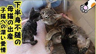 感動 泣ける話・下半身不随で死の淵を彷徨っていた母猫お腹の赤ちゃんへの深い愛情が、母猫の命を繫ぎ止める・招き猫ちゃんねる
