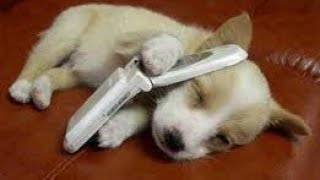 「絶対笑う」最高におもしろ犬,猫,動物のハプニング, 失敗画像集 #94