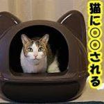 猫の気持ち・貴方は猫に信頼されていますか?…猫に信頼されて「付いてきて!」と言われて辿り着く4つの場所と理由・招き猫ちゃんねる