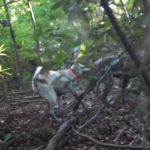 鳥猟犬と猪犬の山歩き
