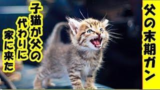 父の末期ガン・子猫が父の代わりに家に来たお話し・招き猫ちゃんねる