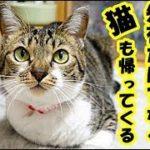 不思議な話・お盆の時、逝った猫が帰ってきて元気をくれた、お盆は先祖だけでなくペットも帰って来るお話・招き猫ちゃんねる