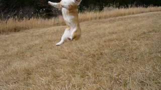 ジャンプ犬(JUMPING DOG)