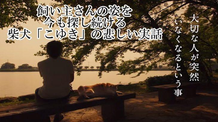 【感動実話 犬】泣ける話 飼い主さんの姿を今も探し続ける柴犬「こゆき」の悲しい実話 chinta ch