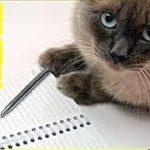 猫の気持ちと習性・猫が絶対に忘れない6つの記憶・招き猫ちゃんねる