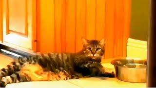 【猫びっくり】猫もびっくり映像集!