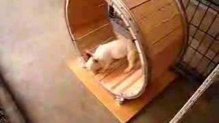 犬の面白動画 ~様子見編~