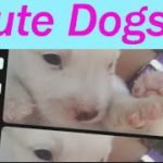 【犬 いぬ イヌ】 犬 かわいい Small Dogs Puppy 7