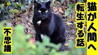 猫の転生・昔死んだ猫が夢に出てきて、私の子供として生まれてくるから、早く結婚して子供を作れと言っているお話・招き猫ちゃんねる