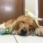 「動物感動」犬,猫,ライオン…異なる種の動物達でも友情は存在する・みんな超かわいい!