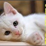 安楽死 ー哀しい話 子猫の交通事故が幼かった俺に命の尊さ、はかなさを教えてくれた・招き猫ちゃんねる