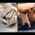 「泣けるほど感動」心を動かす犬と猫の動画! 涙が止まらない Park 1