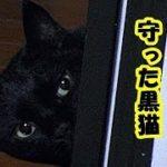 心霊 怖い話・生首と対決して飼い主を守った黒猫のお話・招き猫ちゃんねる