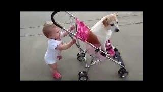 「絶対笑顔」犬と子どもが一緒に育つ。 面白いと超かわいい