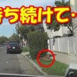 飼い主を待ち続けた犬!捨てられて路上に住むようになった老犬を保護【驚愕】