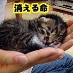 泣ける話・野良の子猫の悲しく非情な現実に涙が止まらない、生まれた子猫は短いサイクルで消えては新しい命も誕生していく・招き猫ちゃんねる