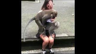 「絶対笑う」最高におもしろ犬,猫,動物のハプニング, 失敗画像集 #888藍藍
