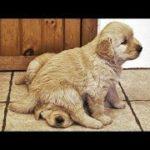 「絶対笑う」最高におもしろ犬,猫,動物のハプニング, 失敗画像集 #357