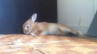 【こなつ動画】びっくりするうさぎ-Rabbit surprised
