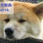 【かわいい】おもしろ犬動画まとめ Part4【面白】