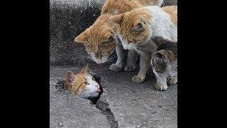 「絶対笑う」最高におもしろ犬,猫,動物のハプニング, 失敗画像集 #223