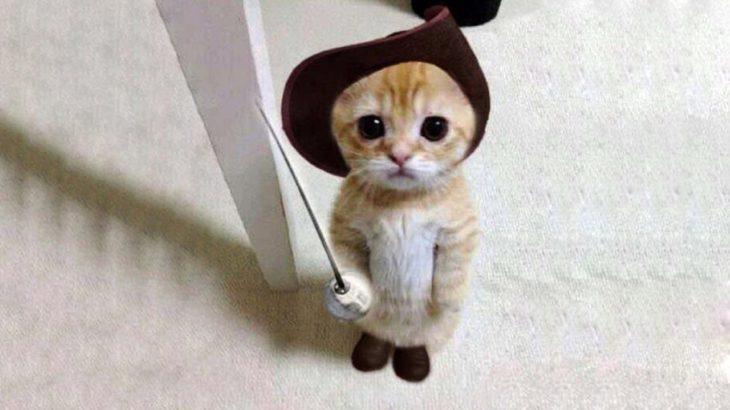 【面白い動画】 かわいい猫 – かわいい犬 – 最も面白いペットの動画 #6
