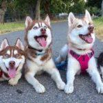 「絶対笑う」最高におもしろ犬,猫,動物のハプニング, 失敗画像集 #299