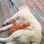 【ハグ】犬と猫のラブラブ仲良し映像【キス】