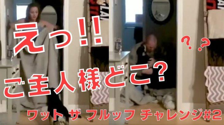 「えっ!?ご主人が消えた!!」飼い主のイタズラマジックに動揺しまくる可愛い犬&猫たち【What The Fluff Challenge #2】