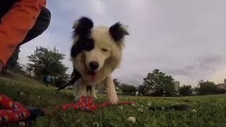 GoProと犬の生活 チェストマウント『犬バカ日記』