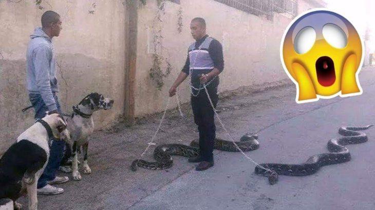「面白い動物」あり得ないことをする犬, 猫・おもしろ犬, 猫のハプニング, 失敗集 #36