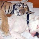 「絶対笑う」最高におもしろ犬,猫,動物のハプニング, 失敗画像集 #370