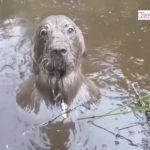 泥んこ遊び楽しくて, どうしても帰りたくない犬の反応が超かわいい #1