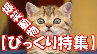 【爆笑♪びっくり特集】可愛すぎる動物たち!おもしろ!ハプニング!犬 猫 動物 爆笑