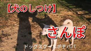 【犬のしつけ】散歩復習編