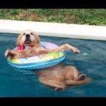 「絶対笑う」最高におもしろ犬,猫,動物のハプニング, 失敗画像集 #377